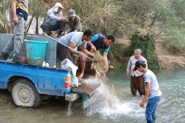 نجات قریب به 10 هزار قطعه ماهی گرفتار گردیده در یک آبگیر کوچک